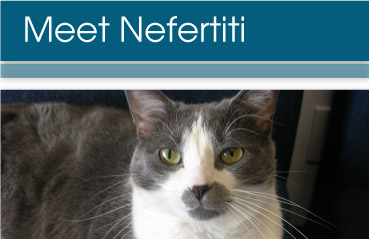 Meet Nefertiti at Creature Comforts Animal Clinic