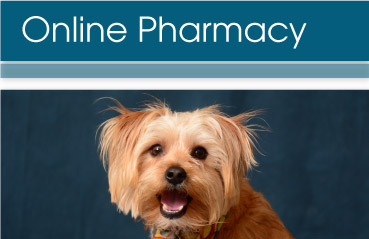 Creature Comforts Animal Clinic Online Pharmacy