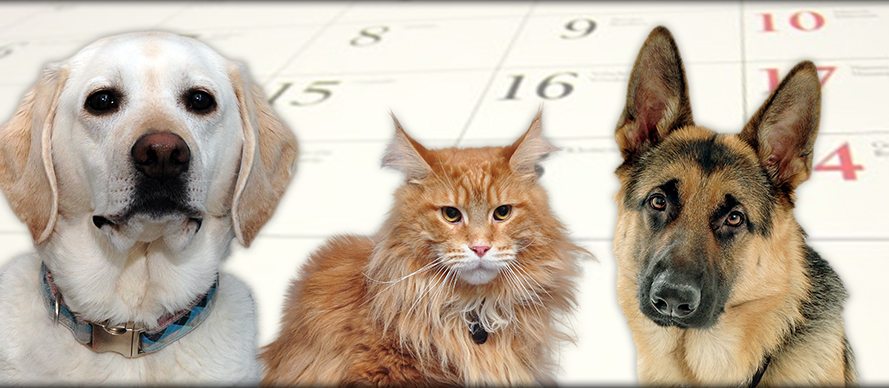 Request an Appointment at Creature Comforts Animal Clinic