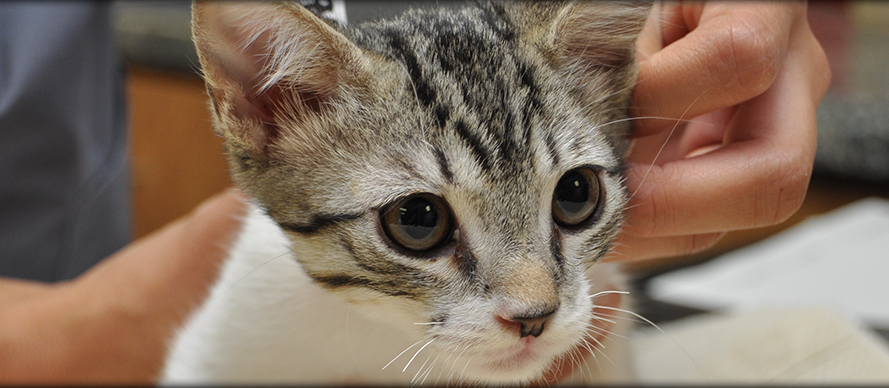 Online Forms at Creature Comforts Animal Clinic