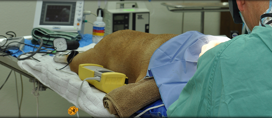 Surgical Procedures at Creature Comforts Animal Clinic